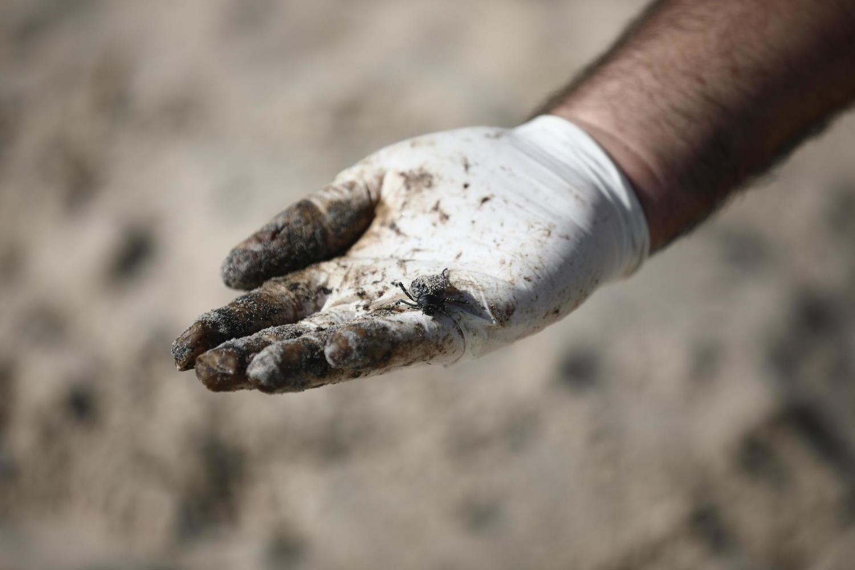 Наложен запрет на информацию о расследовании экологического бедствия на пляжах
