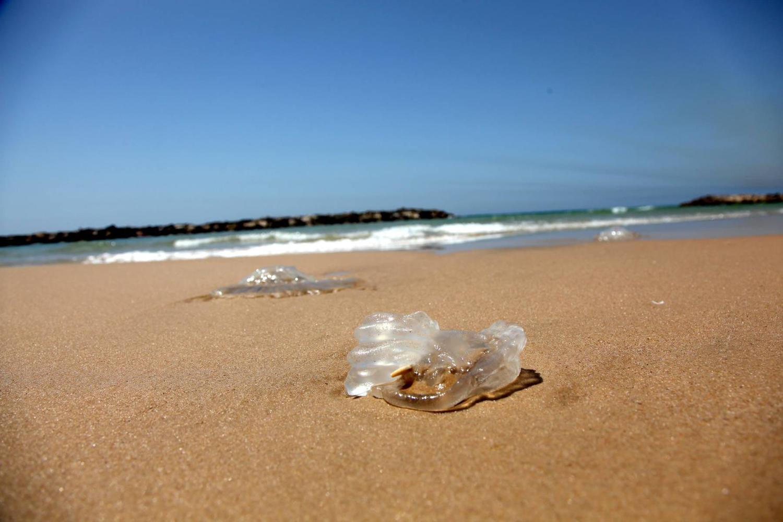 Прогноз погоды на неделю: медузы, прохладно, возможны дожди