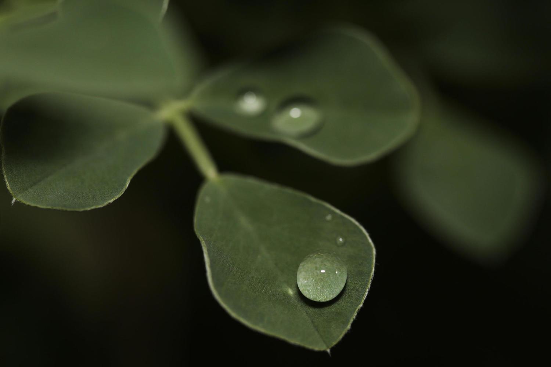 Синоптики обещают четыре нежарких дня с легкими дождями