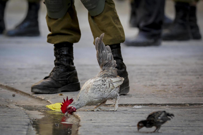 иллюстрация: ЦАХАЛ на палестинских территориях