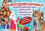 Новогодняя Большая международная выставка кошек с Новогодним представлением Приключение Деда Мороза и Снегурочки